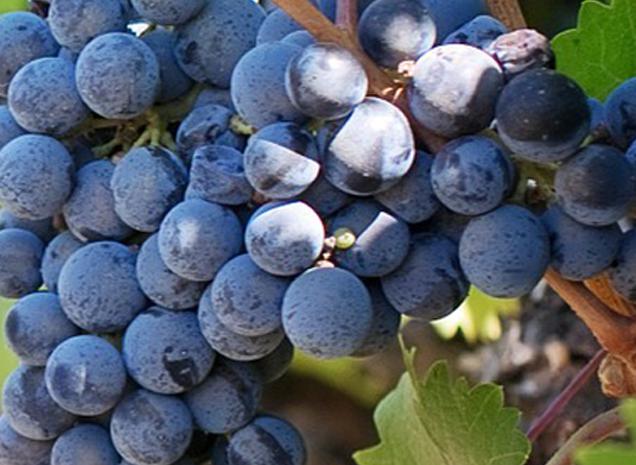 Prachtige Rode Wijnen