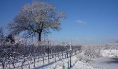Winter in de Wijngaard