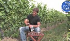 Wijn van de Maand: Wijngoed Thorn Dornfelder